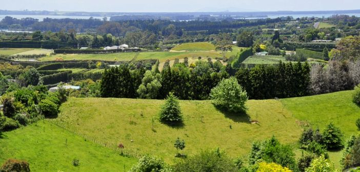One of New Zealand's biggest environmental problems is erosion caused by bush clearance on unstable soils by long ago farmers