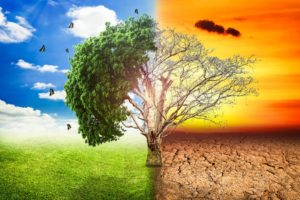 Optimized-global-warming-climate-change-tree_1big_stock2