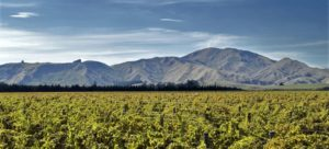 Wine-Trail-Wairarapa