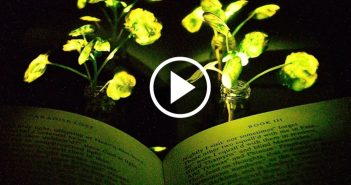 Could plants replace street lights?
