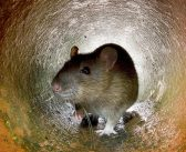 How the Internet of Things is revolutionising pest control